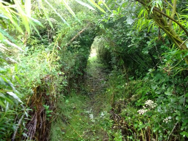 bealtaine cottage paths