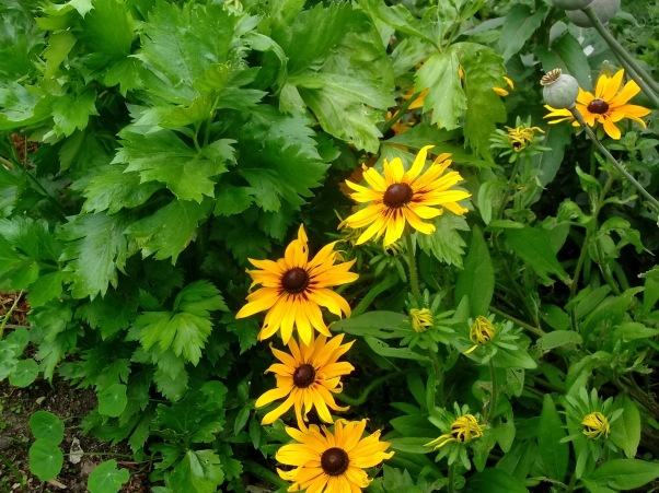 Celery and Rudbeckia