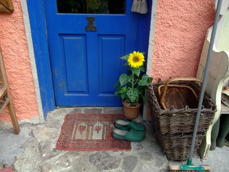 Dwarf sunflower at Bealtaine Cottage