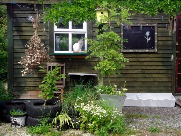 cats at Bealtaine Cottage