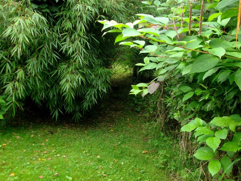 early autumn in the permaculture gardens of Bealtaine Cottage