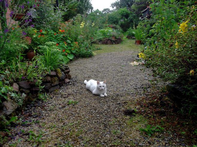 Sammy-Bear Cat