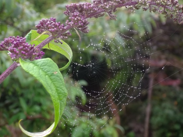 cobwebs at bealtaine cottage