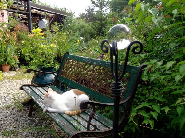 Che Mousey Bear relaxes on the bench