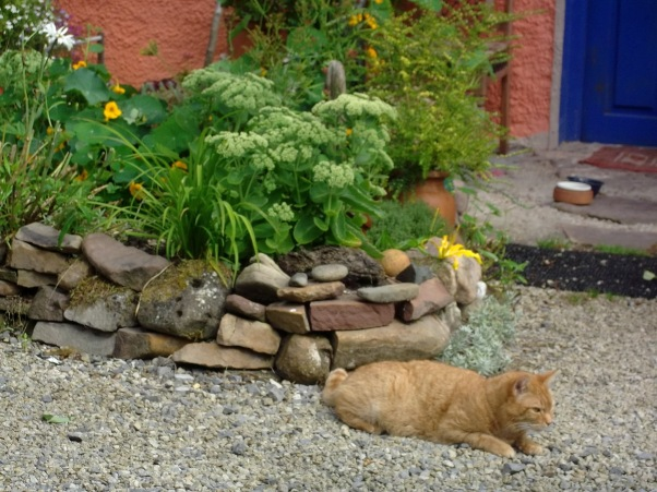 Missy Cat lounges on the gravel