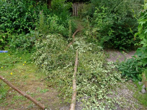 coppicing birch trees in the permaculture gardens