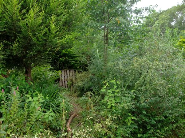 coppicing at Bealtaine Cottage