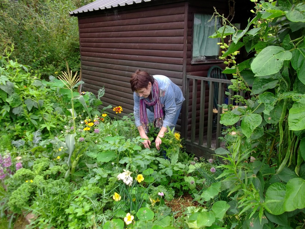 Working in the potager