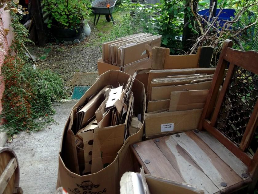 cardboard in the permaculture garden