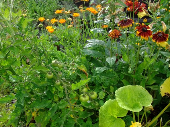 Potage beds in permaculture