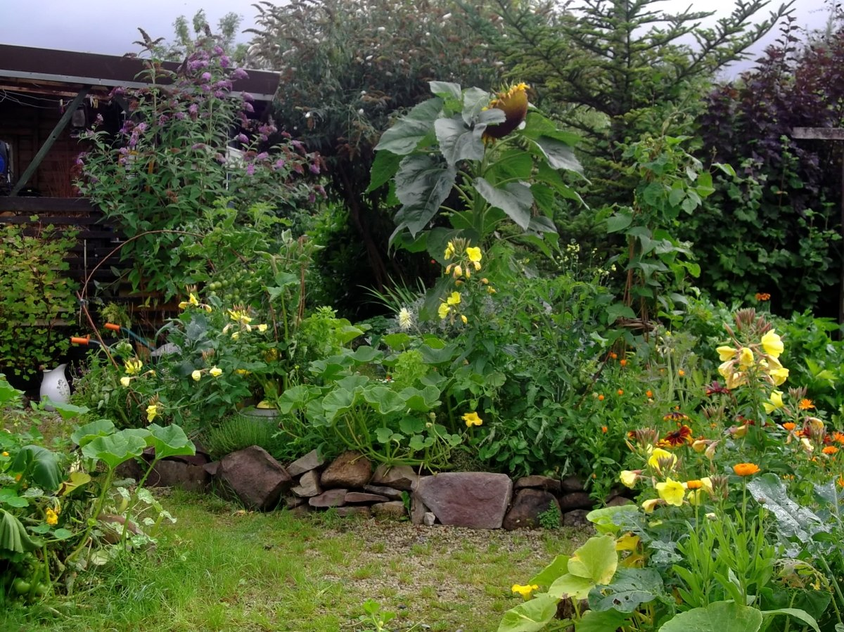 permaculture raised beds
