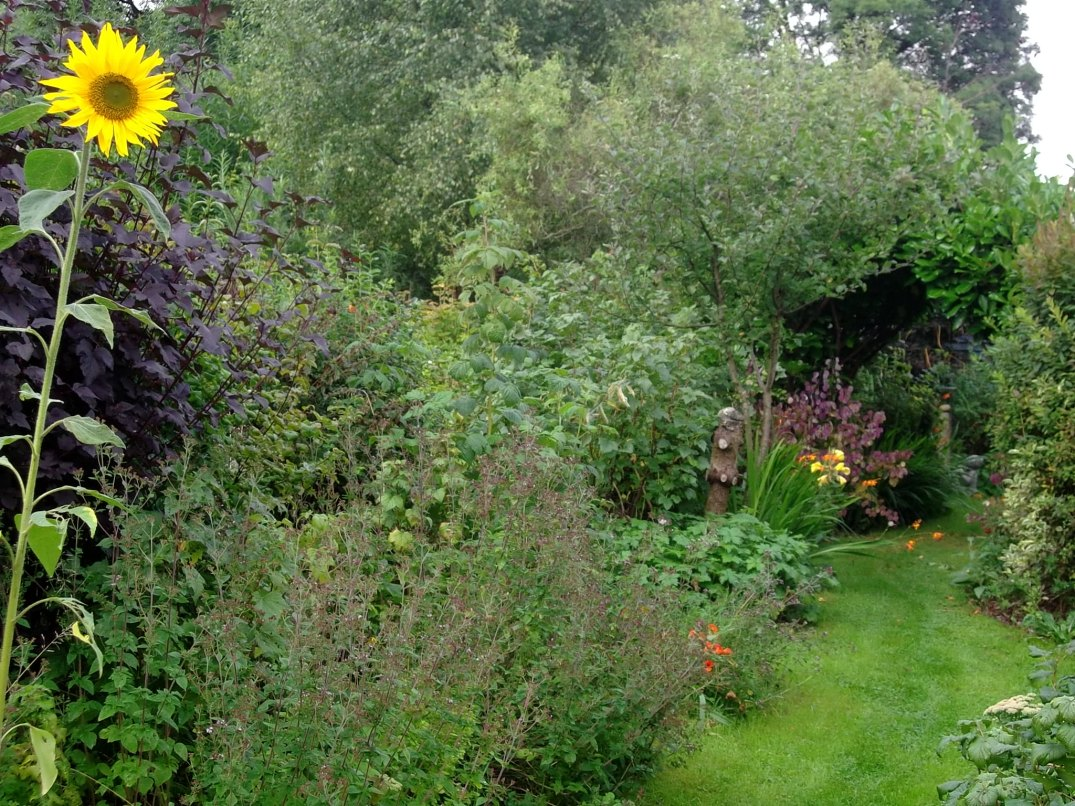 permaculture gardens of Bealtaine in early September