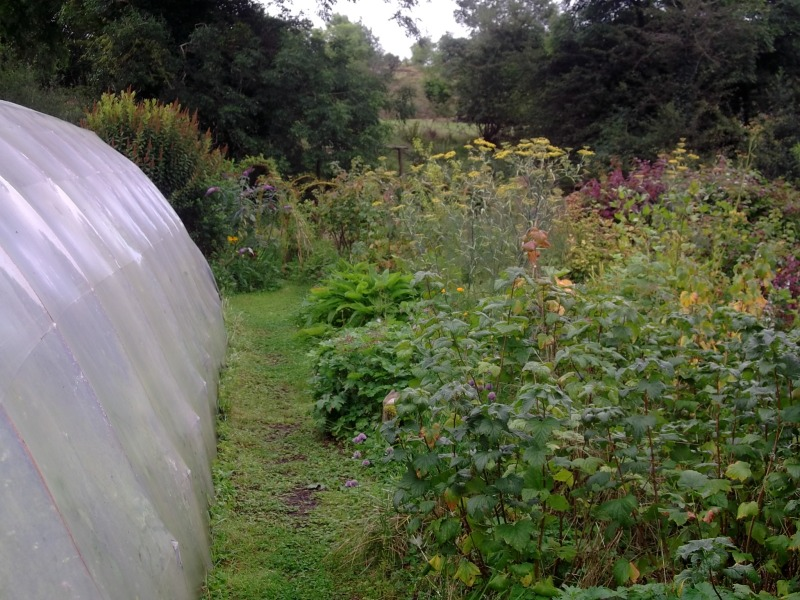 polytunnel and herb garden