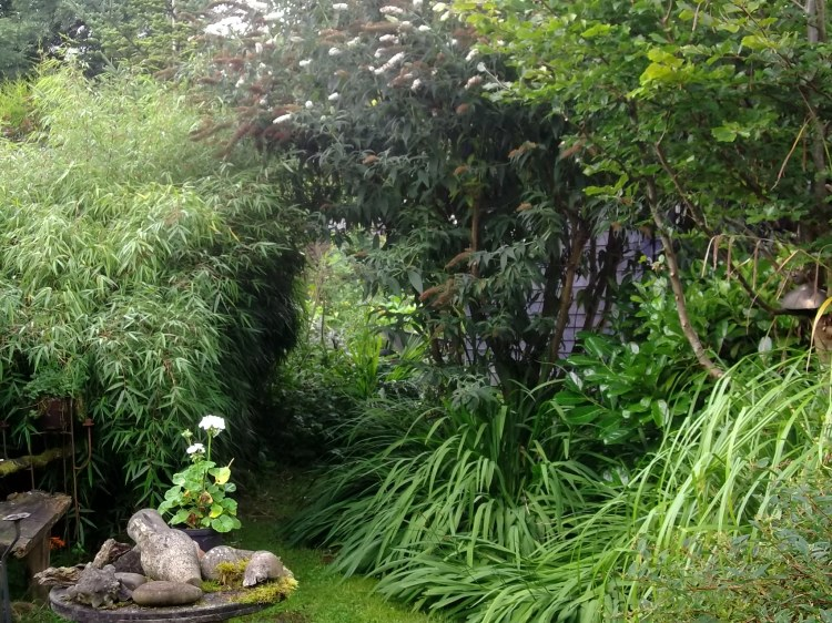 little side garden of peace