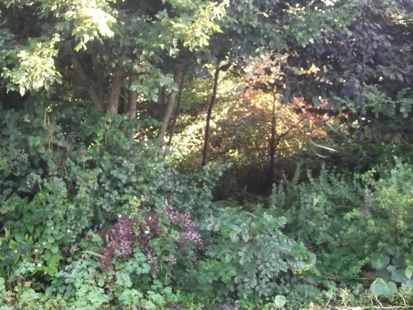 Autumn 2013 at Bealtaine Cottage 009