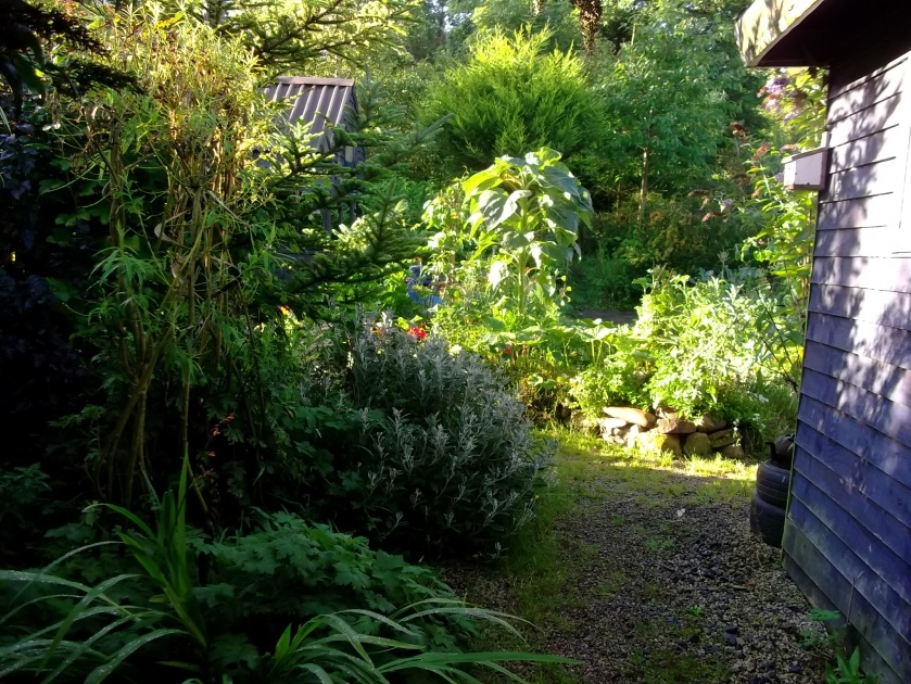 Autumn 2013 at Bealtaine Cottage 015