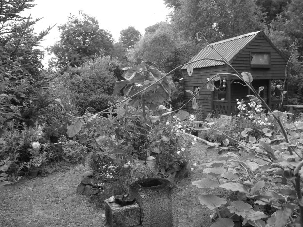 Autumn in the Permaculture Gardens of Bealtaine Cottage 001