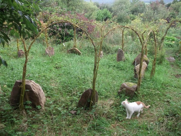 Autumn in the Permaculture Gardens of Bealtaine Cottage 013