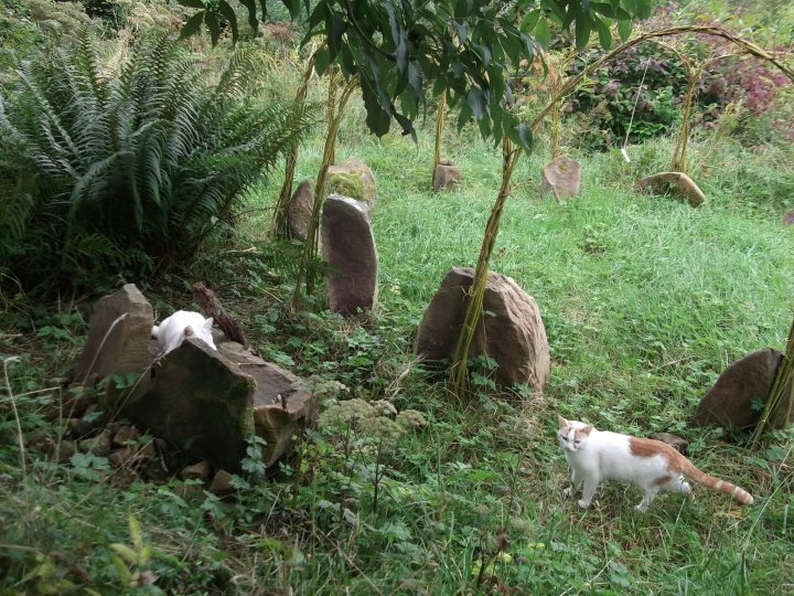 Autumn in the Permaculture Gardens of Bealtaine Cottage 016