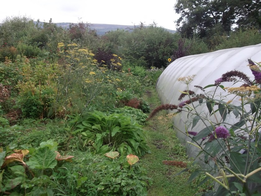 Autumn in the Permaculture Gardens of Bealtaine Cottage 025