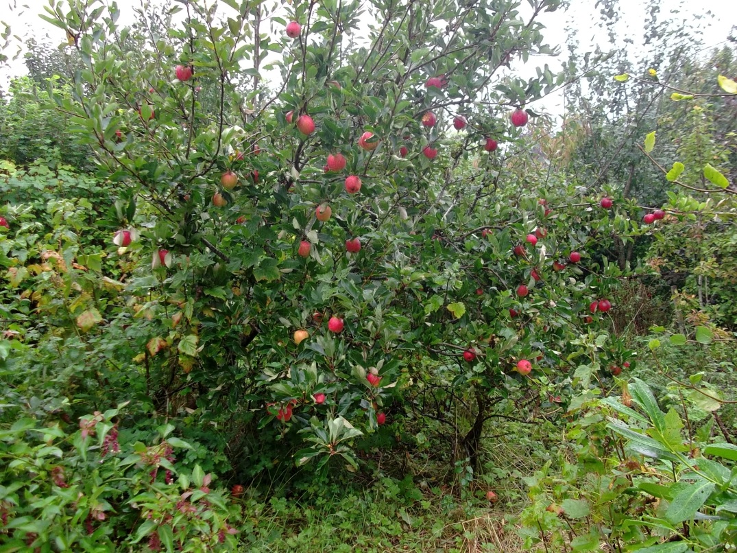 permaculture at Bealtaine Cottage 018