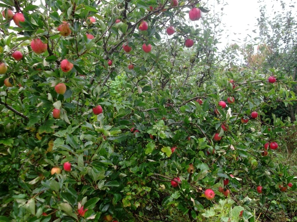 permaculture at Bealtaine Cottage 019