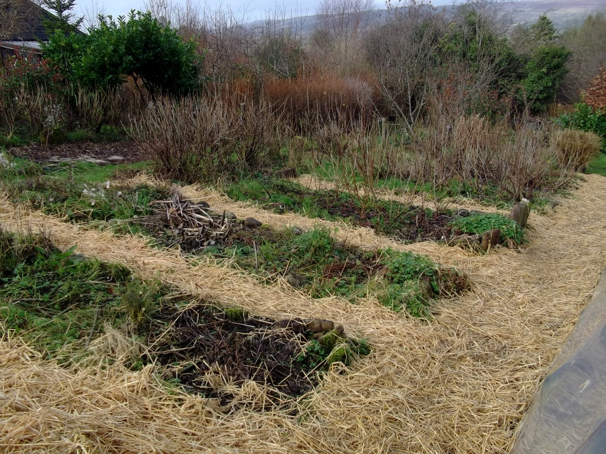 Fresh straw was laid on the paths between the beds.