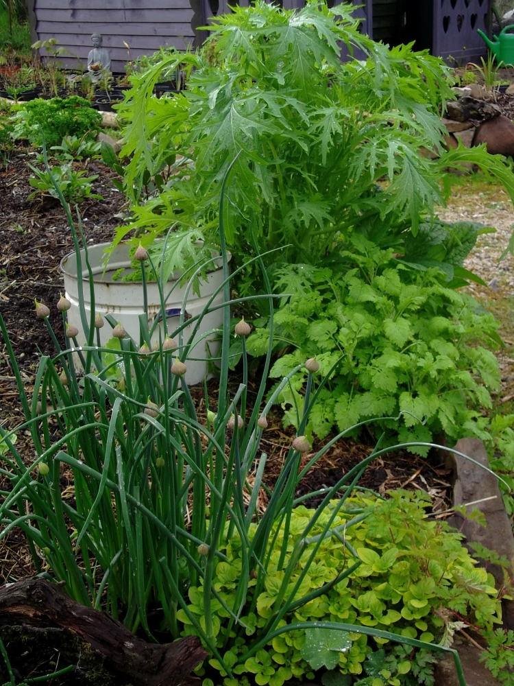Mixed planting in the very productive Potager Beds