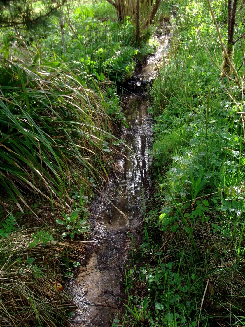 Stream flowing from the Spring Well through both ponds