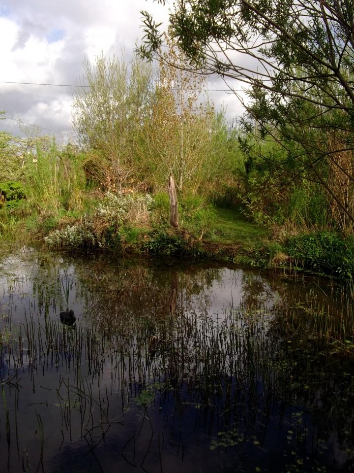 The Bog Garden at Bealtaine Cottage