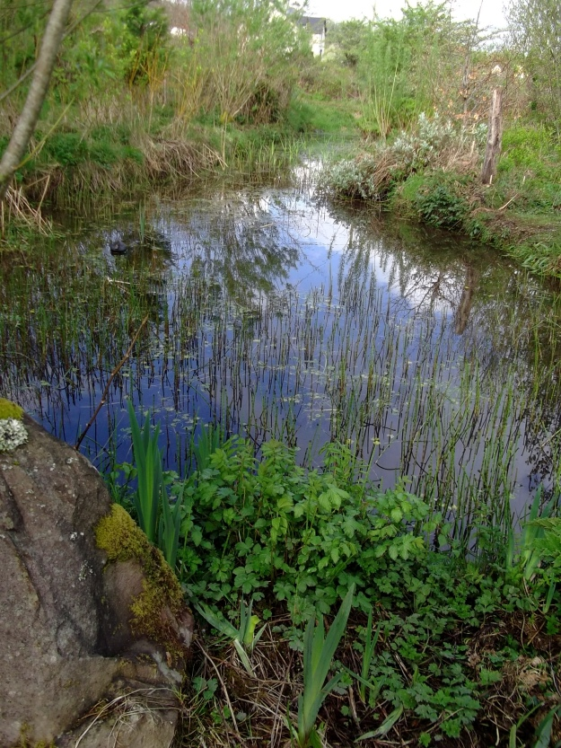 The Lower Pond filled with clean Spring water that flows out into the River Shannon and on into the Atlantic Ocean!