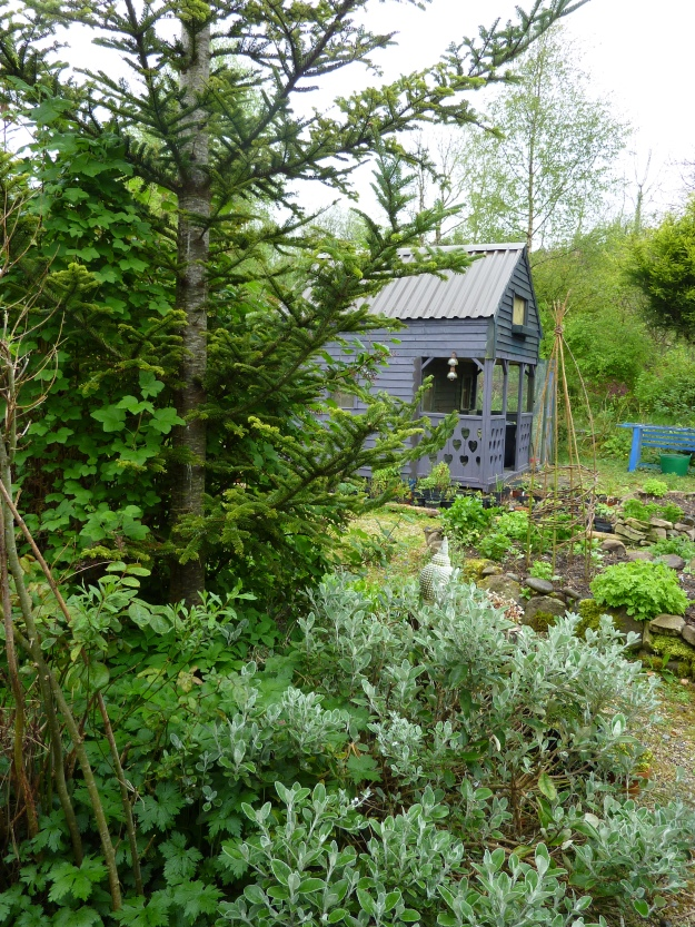The hen-house is all quiet on the Eve of Bealtaine.