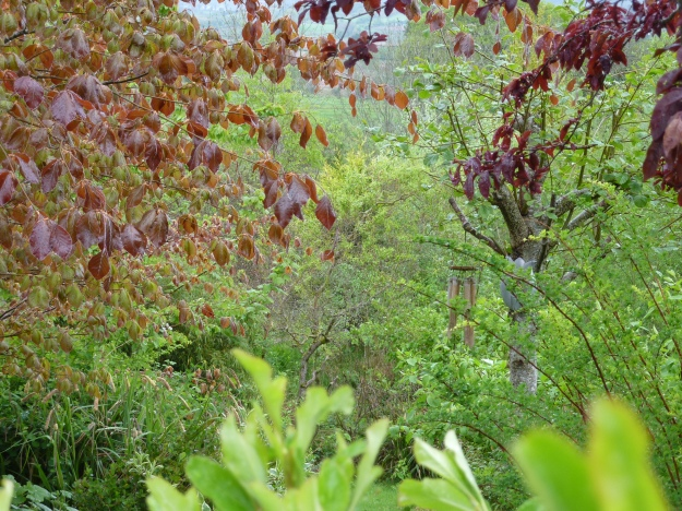 looking deep into the gardens of Bealtaine