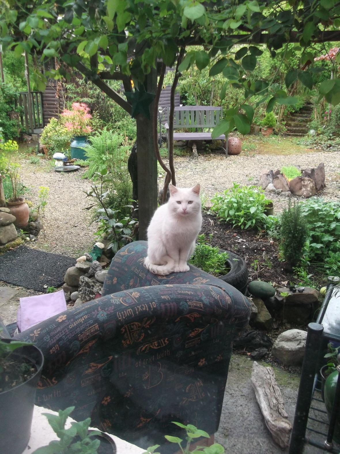 Sammy-Bear takes a seat...