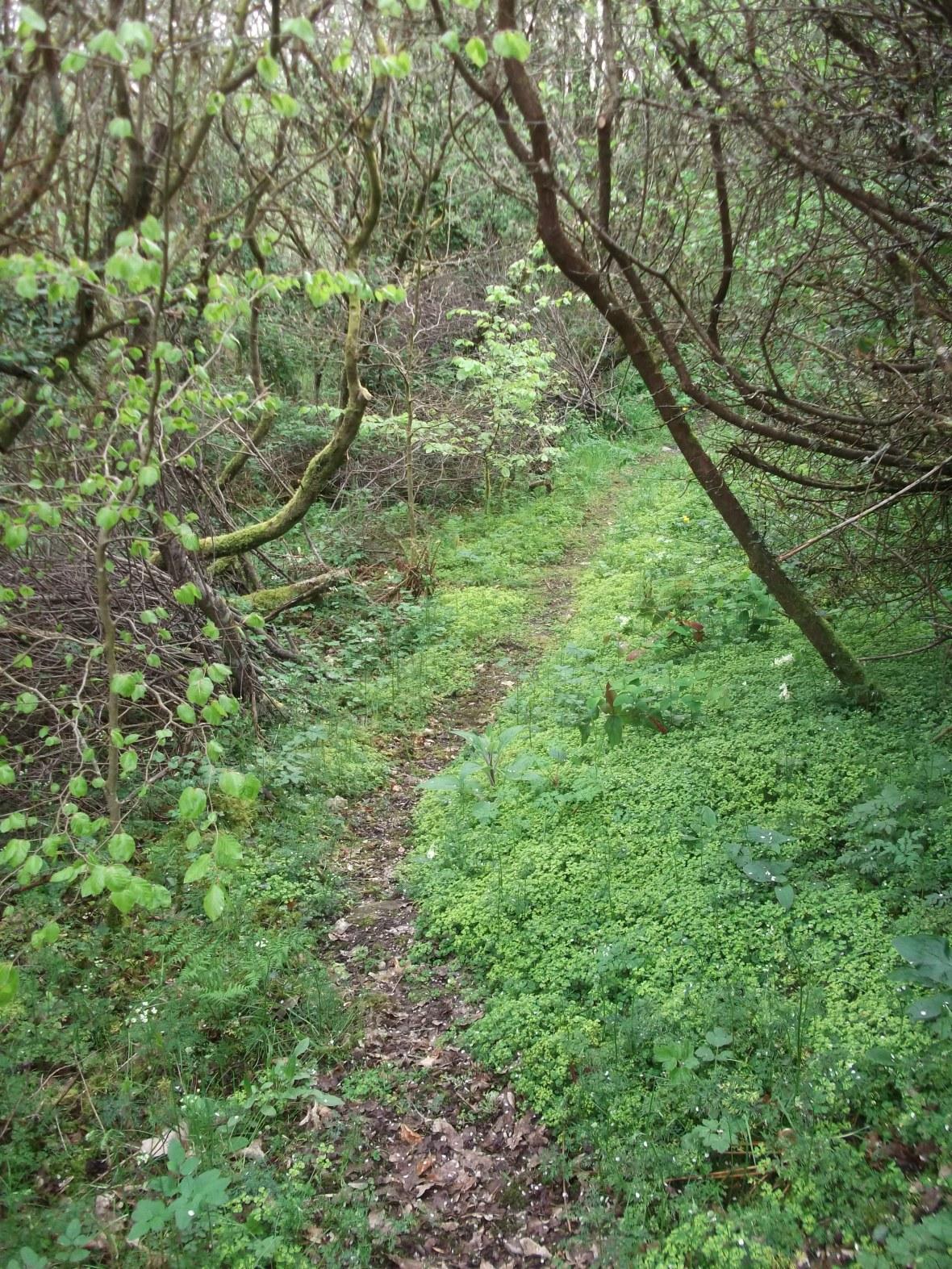 Through the Fairy Wood...