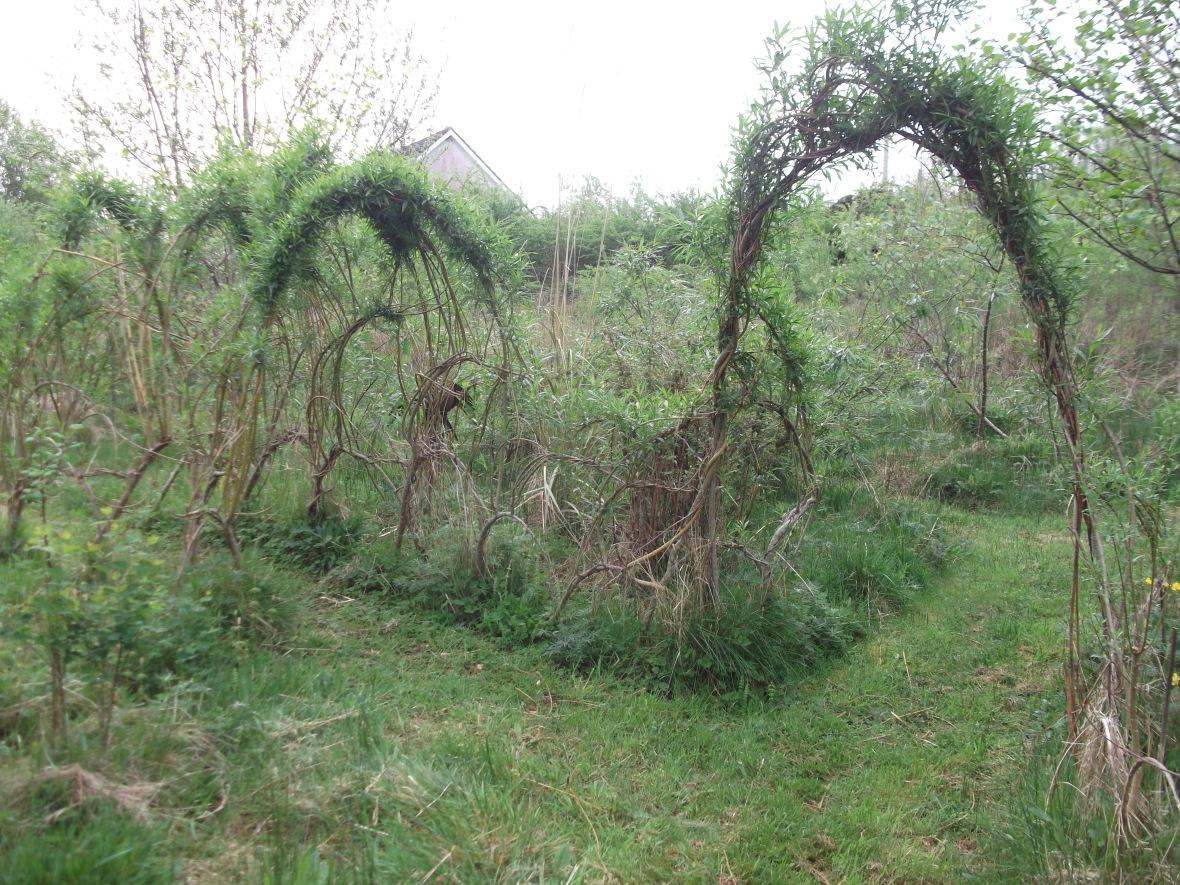 Willow in the Bog Garden