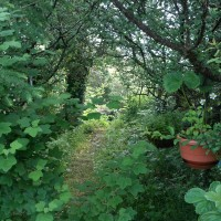 The Fairy Wood at Bealtaine Cottage, Ireland.