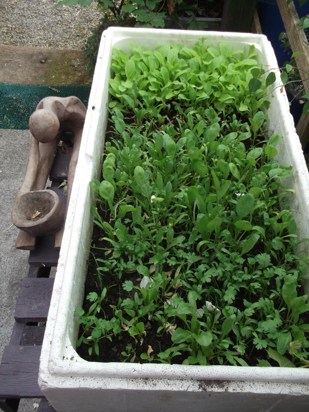bealtainecottage.com permaculture (22)