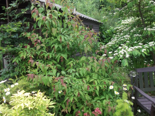 bealtainecottage.com permaculture (6)