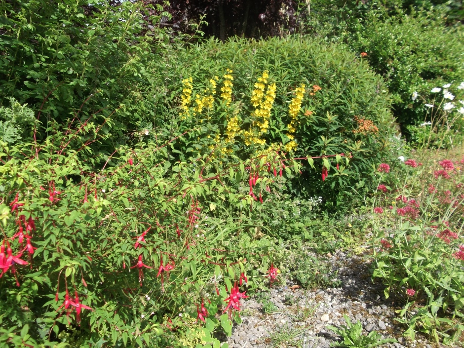 permaculture @ bealtainecottage.com (6)
