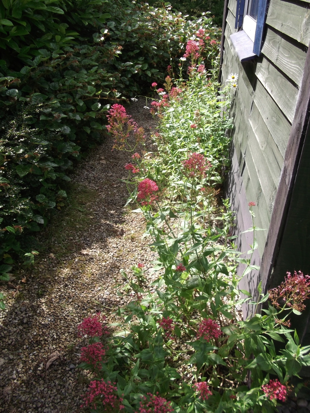 permaculture @ bealtainecottage.com (9)
