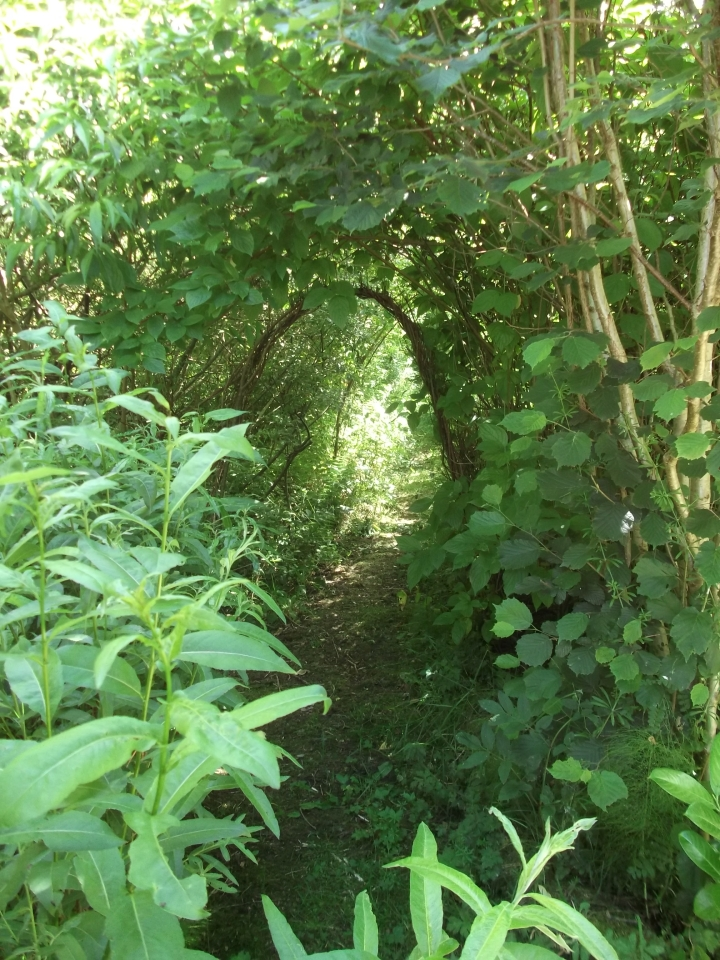 bealtainecottage.com Permaculture 004