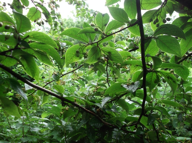 Permaculture at www.bealtainecottage.com 006