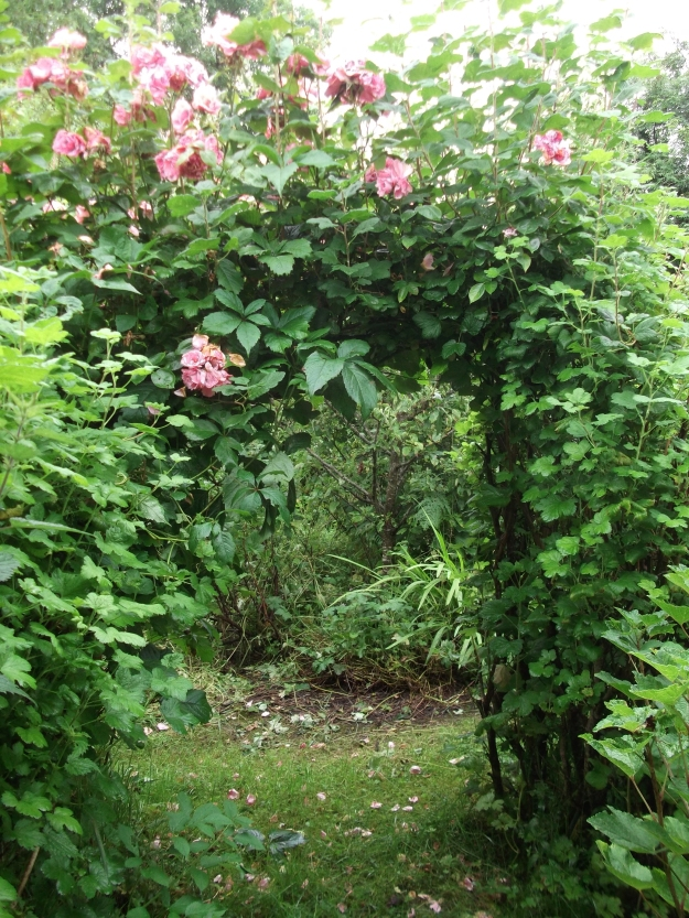 Permaculture at www.bealtainecottage.com 007