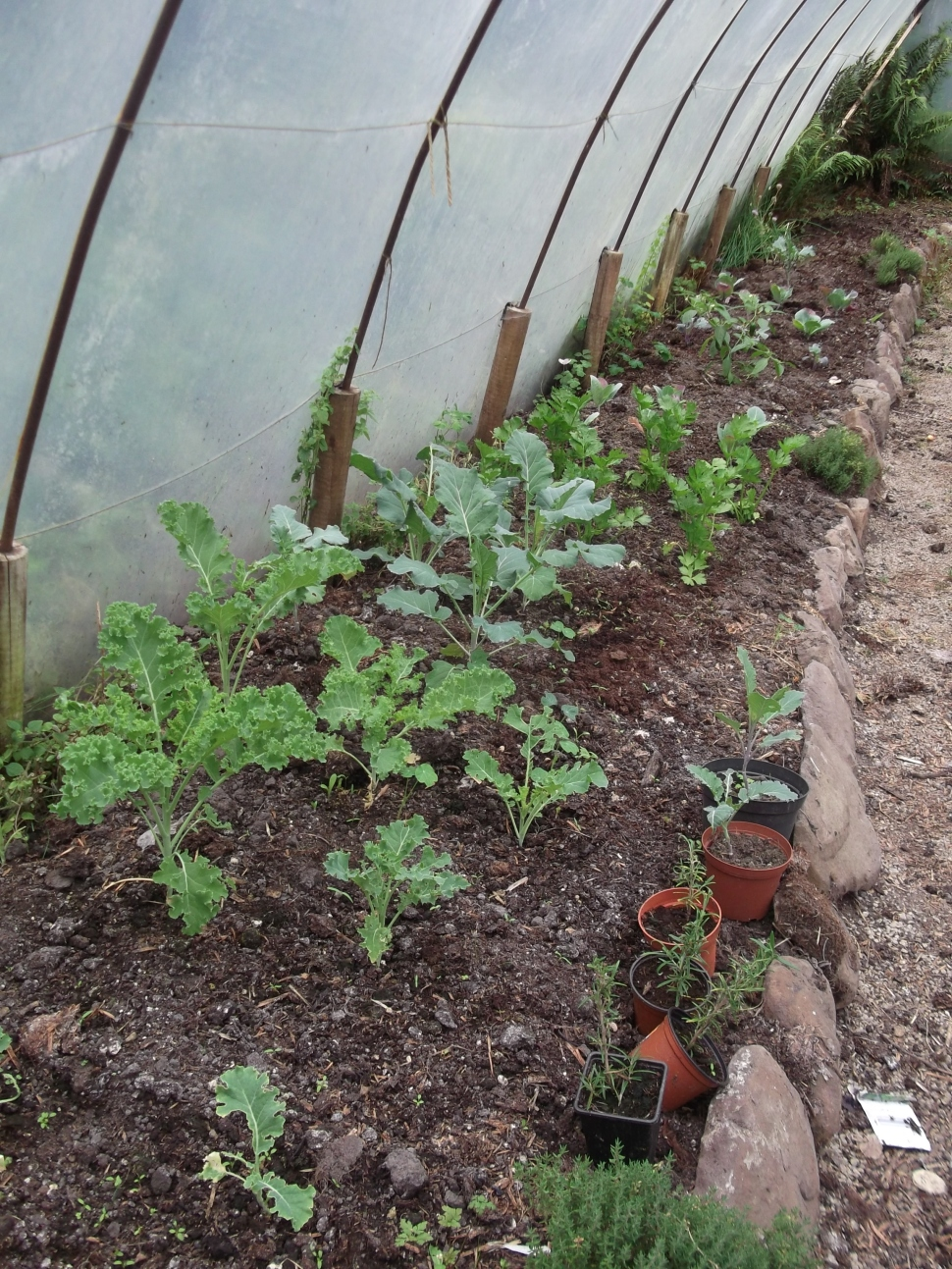 Permaculture at www.bealtainecottage.com 011