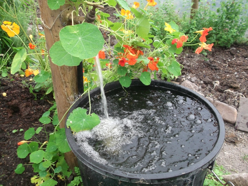 Permaculture at www.bealtainecottage.com 012