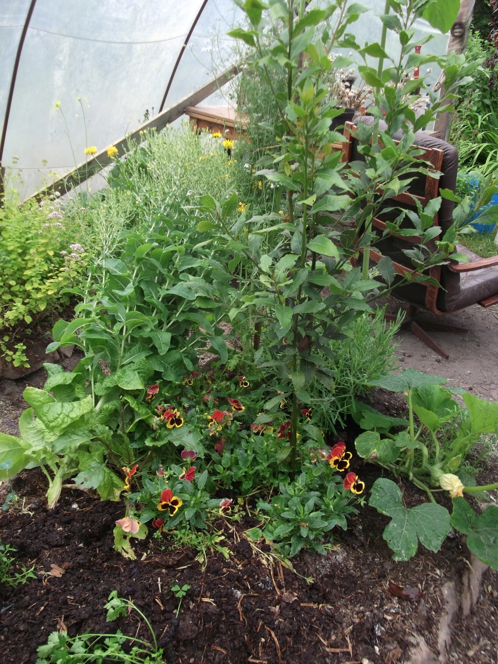Permaculture at www.bealtainecottage.com 013