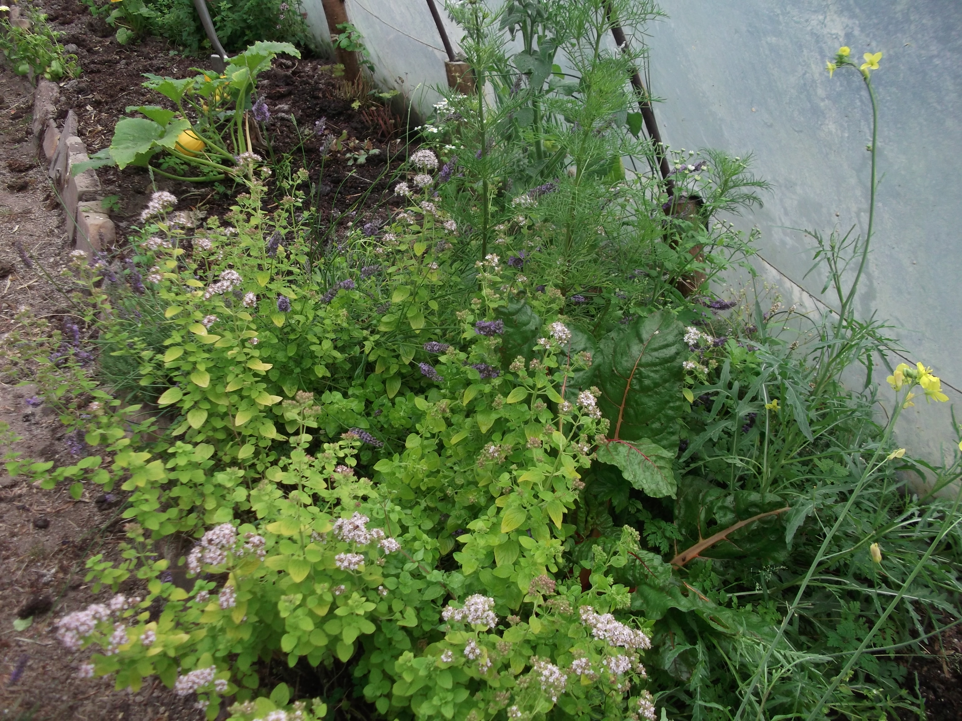 Permaculture at www.bealtainecottage.com 014