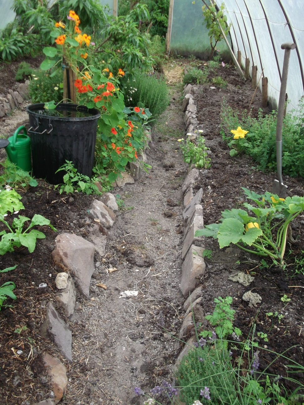 Permaculture at www.bealtainecottage.com 016