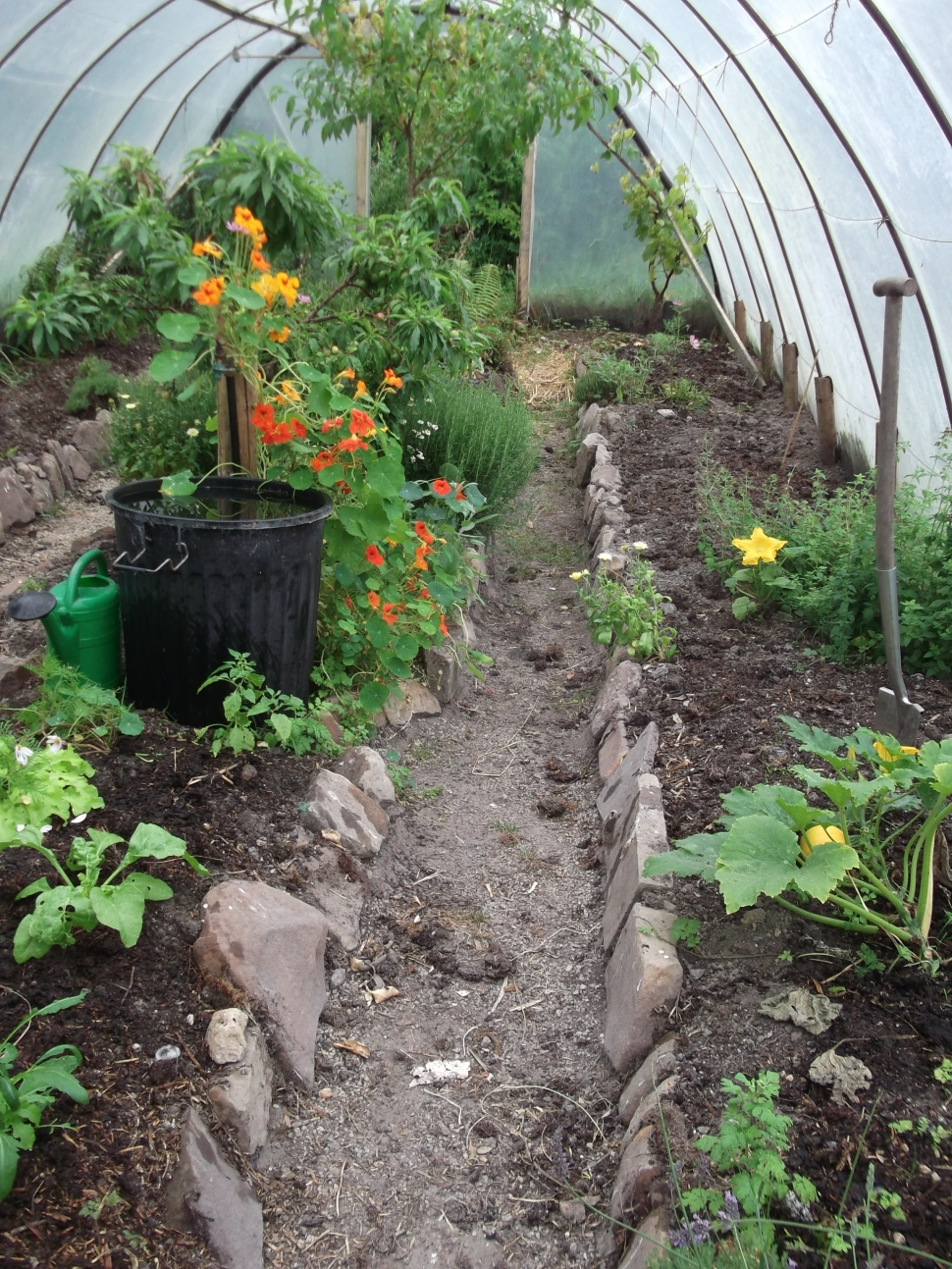 Permaculture at www.bealtainecottage.com 017